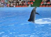 Дельфин Василиса
