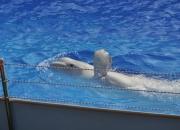 Белый кит Степан