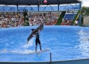 Дельфины и тренер