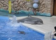 Дельфины и белый кит