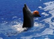 Дельфин Жужа