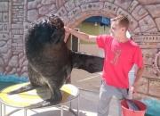 Южноамериканский морской лев Макс и его тренер